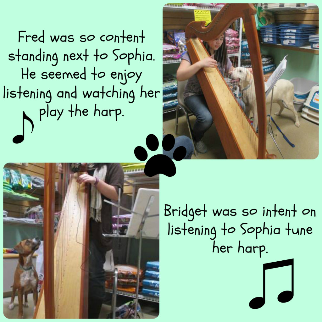 Fred & Bridget Harp